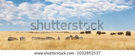 Elephants herd and migrating zebra  in the Masai Mara. Panorama in popular social media banner dimensions #1032892537