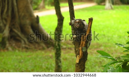 Marmoset eating on a tree #1032944668