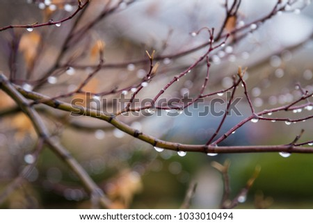 Many raindrops hanging on a branch after the rain; beautiful blur of background droplets #1033010494