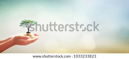 International day of charity concept: Human hands holding stacks of golden coins and growth tree on blurred green nature autumn sunset background Royalty-Free Stock Photo #1033233823