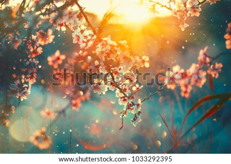 Spring blossom background. Beautiful nature scene with blooming tree and sun flare. Sunny day. Spring flowers. Beautiful Orchard. Abstract blurred background. Springtime #1033292395