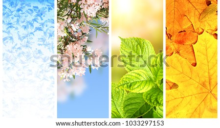 Four seasons of year. Set of vertical nature banners with winter, spring, summer and autumn scenes #1033297153