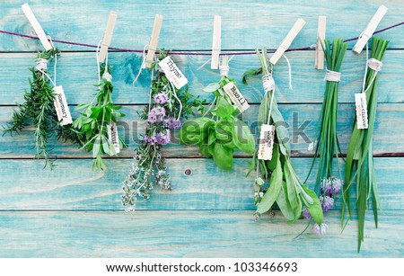 Assorted hanging Herbs on an old and vintage wooden blue background, for seasoning concept. Royalty-Free Stock Photo #103346693