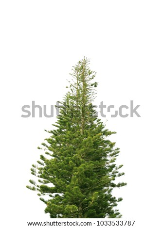 Pine on white background #1033533787