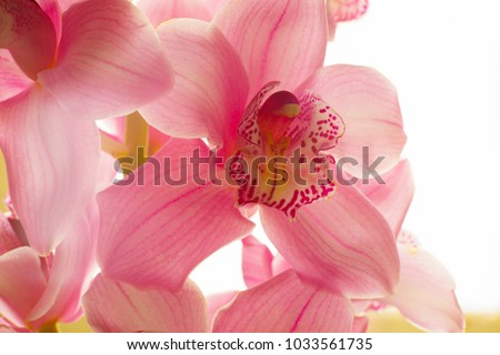 The Orchid flowers. Beautiful floral background for greeting cards, wallpapers, covers, phone screen savers, posters, wedding invitations. Close-up photo. Bright romantic background
