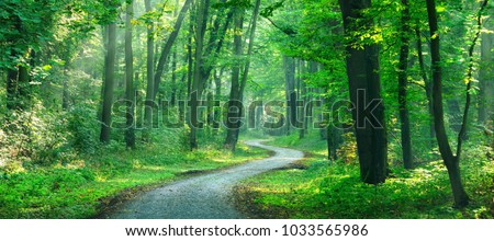 Winding gravel road through sunny green Forest illuminated by sunbeams through mist #1033565986