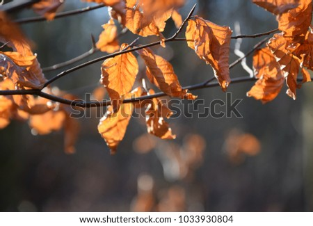 dry Brown leaf on tree,nature in forest #1033930804