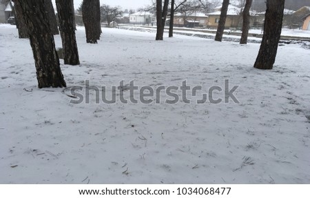 Winter weather in my surroundings,snow in the park Nature of serbia 2018 #1034068477