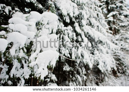 Pine trees covered by snow. Beautiful winter landscapes. Frost nature. #1034261146