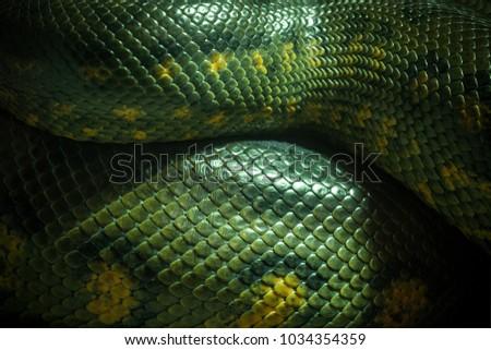 Texture and body of anaconda green. #1034354359