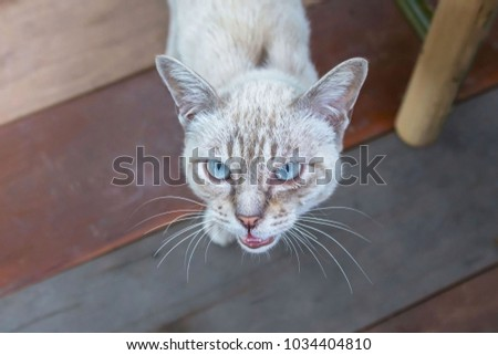 Surprised cat looking at the camera. #1034404810