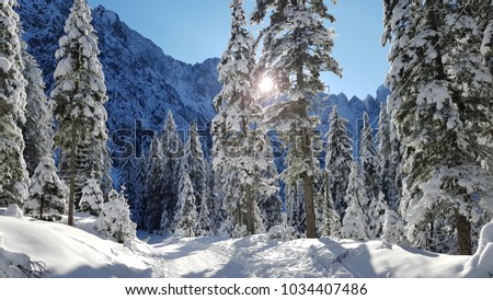 Tamar, Kranjska Gora, Slovenia. Winter scenery on the way to Mountain Home in Tamar. Perfect location for friends and families to enjoy winter time. #1034407486