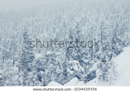 Majestic white spruces glowing by sunlight. Picturesque and gorgeous wintry scene.  Beauty world. #1034439196