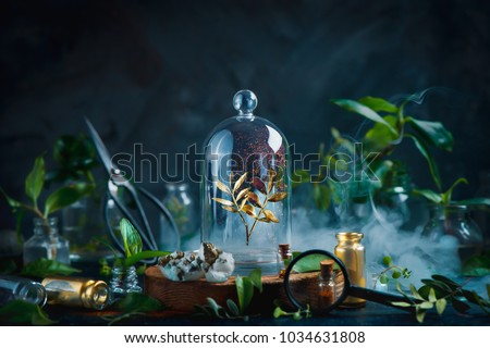 Rare plant under a glass dome. Preserving precious things concept. Botanical still life with copy space. #1034631808