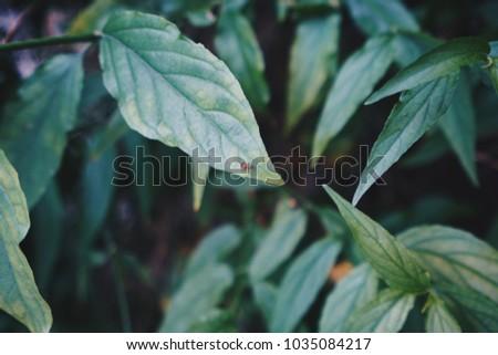 A red bug on a green leaf #1035084217