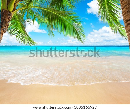 Coconut palm trees against blue sky and beautiful beach in Punta Cana, Dominican Republic. Vacation holidays background wallpaper. View of nice tropical beach. #1035166927