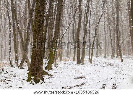 Winter landscape of the frozen forest #1035186526