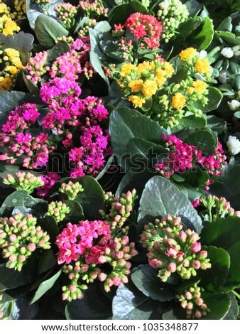 Wonderful Spring Flowers #1035348877