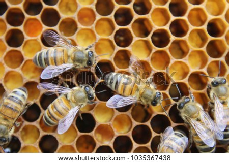 Honeycomb inside the beehive with bees at work. #1035367438