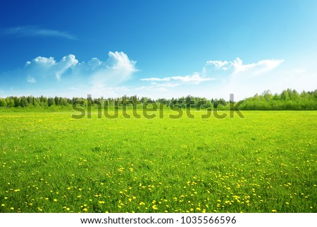 field of spring flowers and perfect sky #1035566596