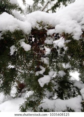 Shovel snow on the trees in the garden #1035608125