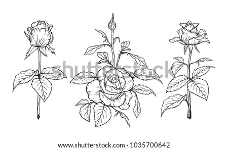Vector Flowers and Leaves set. Hand drawn Branches of Rose Flower Sketch. Beautiful Bouquet of Summer garden flowers isolated on white background.