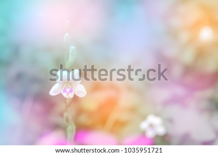 litttle white flower  soft focus  with colorful bokeh spring background #1035951721