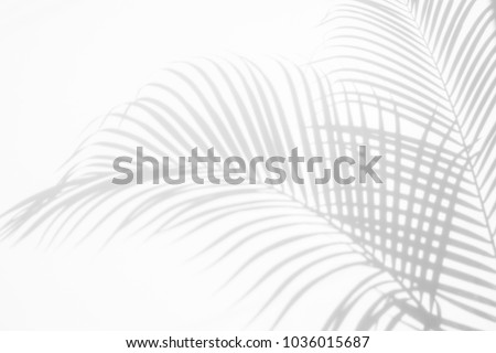 abstract background of shadows palm leaf on a white wall. White and Black. Royalty-Free Stock Photo #1036015687