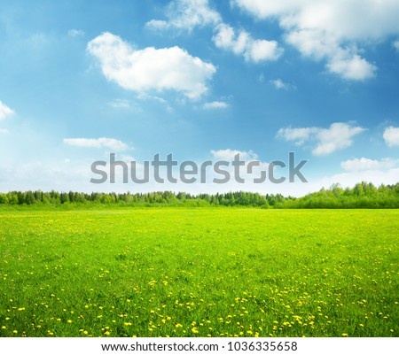 field of spring flowers and perfect sky Royalty-Free Stock Photo #1036335658
