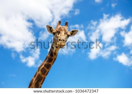 the head of a giraffe against the sky