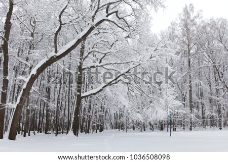Beautiful winter weather concept. Snowfall in the park, snow covered treetops landscape. #1036508098