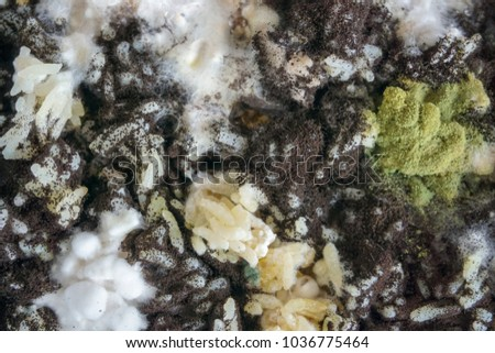 Close up Fungus on cooked rice. Mouldy food. #1036775464