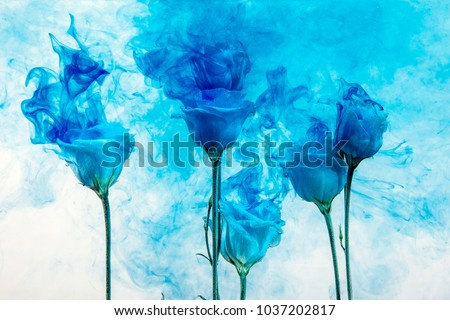 White roses inside in water on a white and blue background. Flowers are under the water with acrylic blue paints.