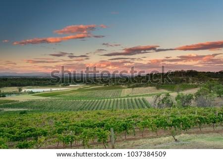 Sunset at the Hunter Valley vineyards, NSW, Australia Royalty-Free Stock Photo #1037384509