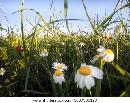 Spring flowers in an endless meadow #1037386123