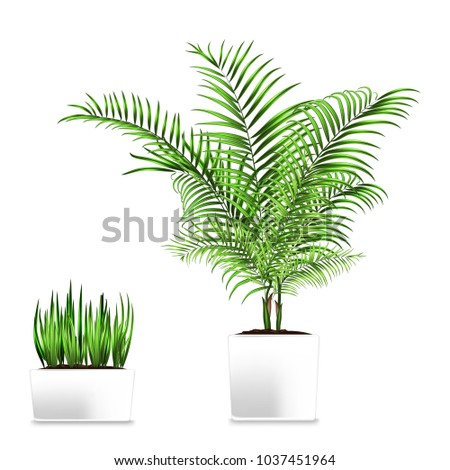 Palm and grass potted in the rectangular containers isolated on white. Element of home decor. The symbol of growth and ecology. Jpg illustration #1037451964