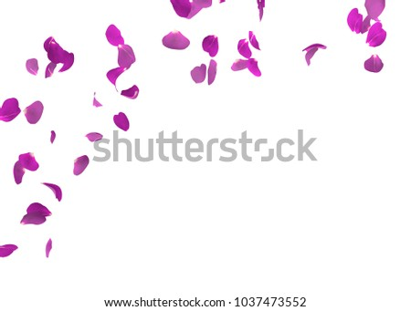 Purple rose petals flying. The center free space for Your photos or text. Isolated white background #1037473552