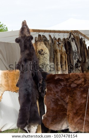 Skins (trapping) of bears, wild boars, foxes, wolves and other fur-bearing mammal at Russian fair. - Field of activity of opponents of use of fur - PETA (People for the Ethical Treatment of Animals) #1037478154