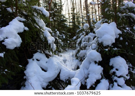 Winter landscape - Christmas trees under the snow. #1037679625