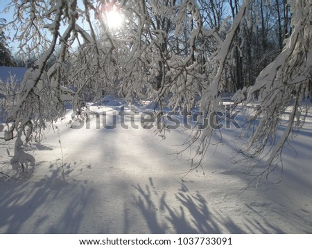 A winter landscape with snowy branches casting shadows against a sunny blue sky #1037733091