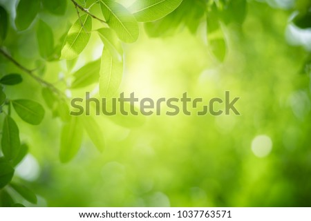 Closeup nature view of green leaf on blurred greenery background in garden with copy space using as background natural green plants landscape, ecology, fresh wallpaper concept. Royalty-Free Stock Photo #1037763571