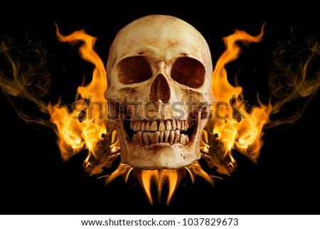 Skull in flame on black background / art image