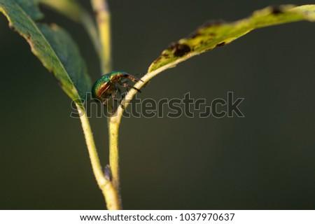 bug clibing on leaf #1037970637