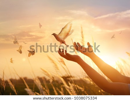 Woman praying and free bird enjoying nature on sunset background, hope concept  #1038075334