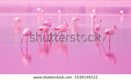Birds Pink Flamingos Walk on the Lake at the Pink Sunset in Cyprus, Beautiful Romantic Concept with a Place for Text, Journey to the South, Love and the Pink Dream, Pink Lake #1038148522
