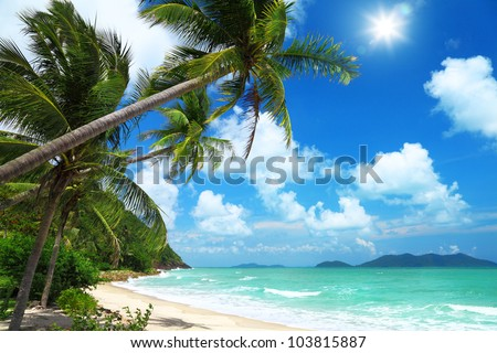 Coconut palms and beach in Thailand #103815887