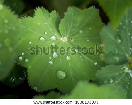 Water drop on leaf #1038193093