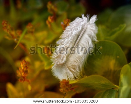 bird feather lying on the grass #1038333280