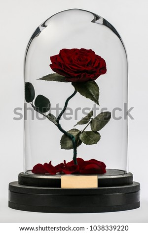 """red rose in a flask from the movie """"Beauty and the Beast"""" Royalty-Free Stock Photo #1038339220"""