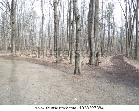 A walk in the woods #1038397384